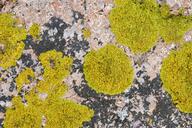 Italy, Sardinia, Lichen on granite rock - RUEF01819