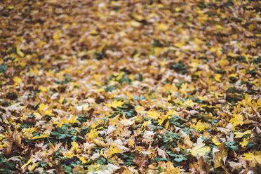 Autumn leaves - JSCF00037