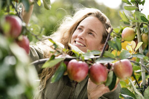 Smiling woman harvesting apples from tree - PESF00952
