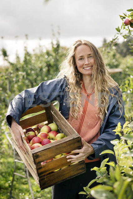 Smiling woman harvesting apples in orchard - PESF00961 - Peter Scholl/Westend61