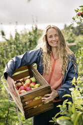 Smiling woman harvesting apples in orchard - PESF00961