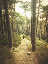 Germany, Rhineland Palatinate, Palatinate Forest, man standing on trail in mystic mossy forest - GWF05423