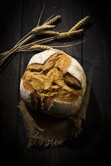 Crusty bread - MAEF12517