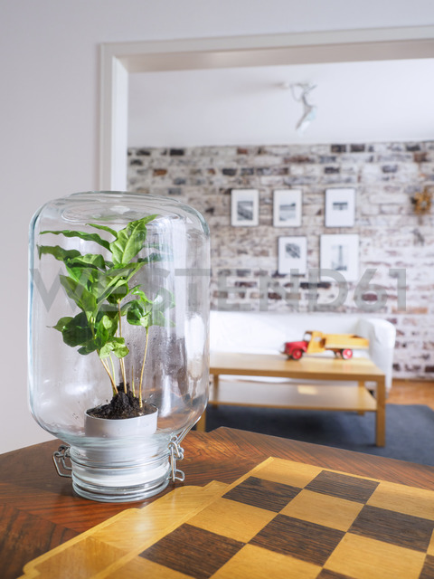 Microclimate, coffee plant under glass, water, recycled, biotope in glass - LAF01964