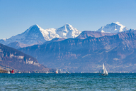 Switzerland, Canton of Bern, Lake Thun and alpine panorama - WDF04423