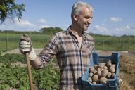 Smiling mature man carrying crate of harvested potatoes at vegetable garden - FSIF00168