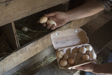 Cropped image of man collecting egg at poultry farm - FSIF00177