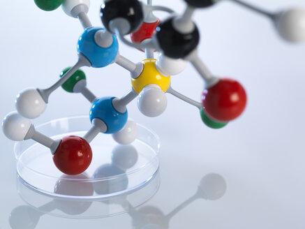 Molecular model in petri dish - ABRF00097