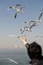 A man feeding seagulls, rear view, Istanbul, Turkey in background - FSIF00654