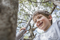 A cheerful young boy climbing a tree - FSIF00690