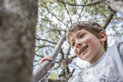 A cheerful young boy climbing a tree - FSIF00690