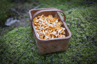 Close-up of mushrooms in basket on moss - FSIF01051