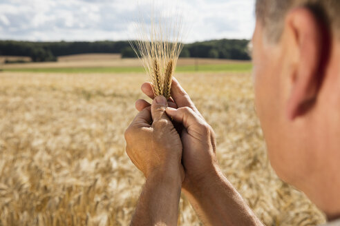 Cropped image of man holding wheat ear at farm on sunny day - FSIF01147