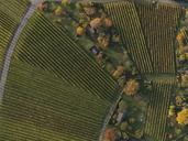 Full frame shot of vineyards in landscape during autumn, Stuttgart, Baden-Wuerttemberg, Germany - FSIF01310