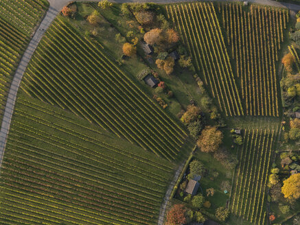 Full frame shot of vineyards in landscape during autumn, Stuttgart, Baden-Wuerttemberg, Germany - FSIF01310