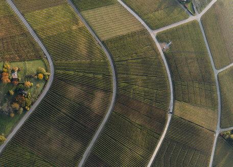 Full frame shot of vineyards in landscape during autumn, Stuttgart, Baden-Wuerttemberg, Germany - FSIF01313