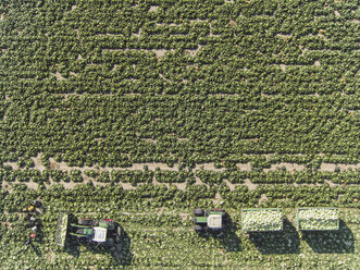 Directly above view of tractors and trailers of cabbage in field, St. Poelten, Austria - FSIF01322
