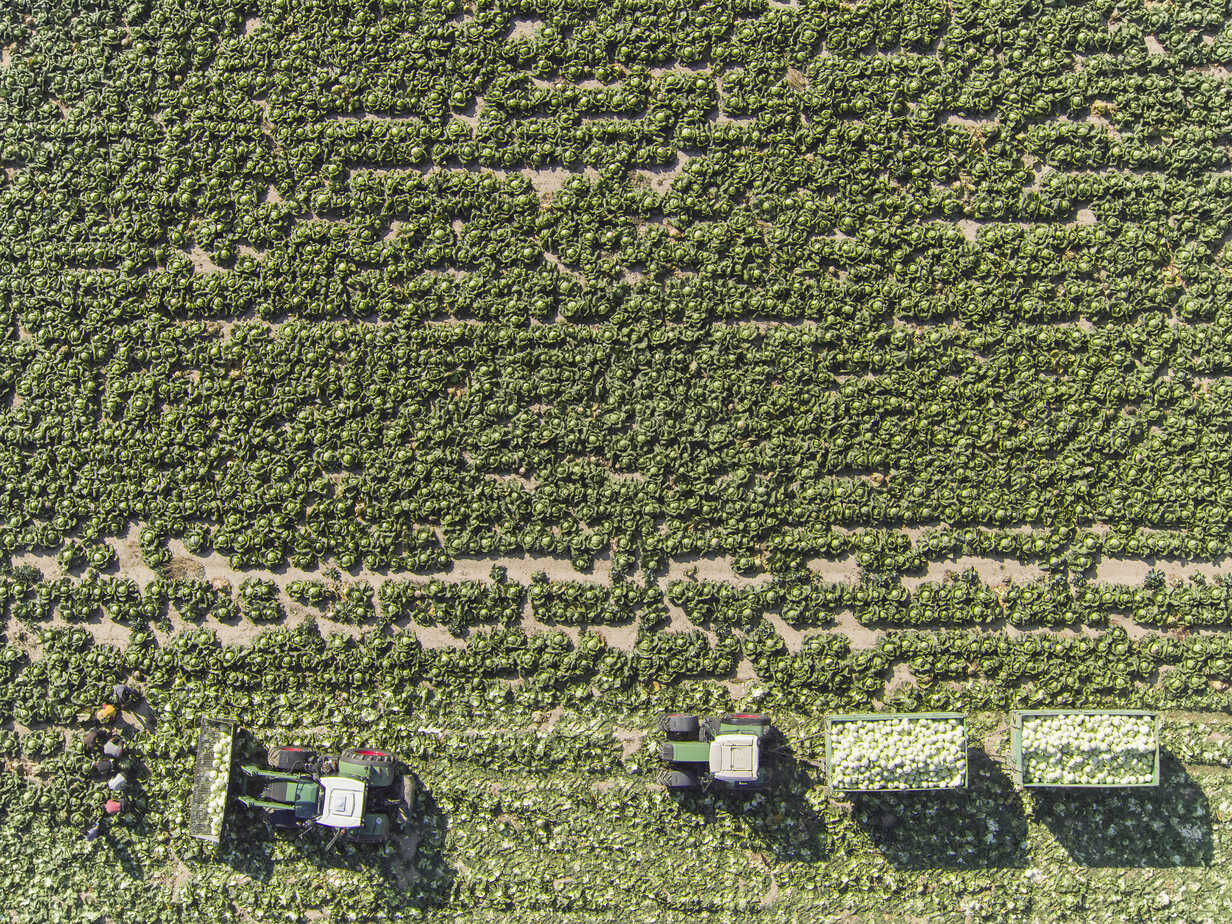 Directly above view of tractors and trailers of cabbage in field, St. Poelten, Austria - FSIF01322 - fStop/Westend61