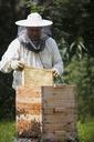 Male beekeeper examining bee hive at farm - FSIF01379