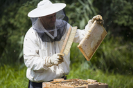 Beekeeper brushing bees from frame of hive at farm - FSIF01382
