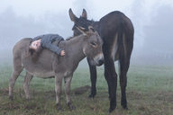 Portrait of girl lying on donkey at field in foggy weather - FSIF01478