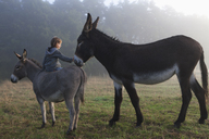 Rear view of girl touching mule while sitting on donkey at field - FSIF01481