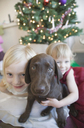 Two young girls at Christmas with brown dog - FSIF02126