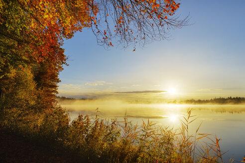 Germany, Bavaria, Upper Bavaria, Toelzer Land, Lake Kirchsee at sunrise in autumn - SIEF07730