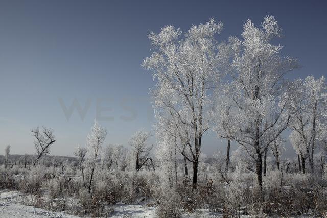 Russia, Amur Oblast, landscape in winter - VPIF00305