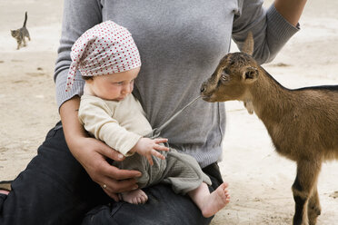 A goat pulling on the drawstring of a baby's pants - FSIF02920