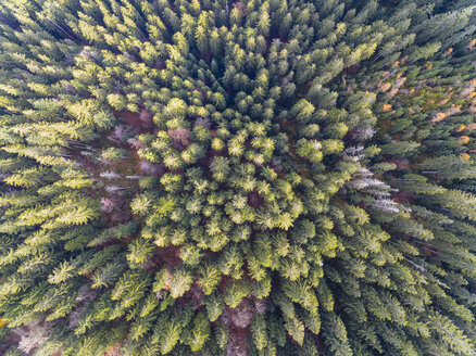 Germany, Bavaria, Lower Bavaria, Bavarian Forest, aerial view - FOF09827