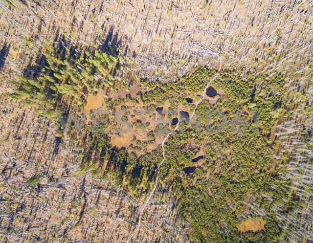 Germany, Bavaria, Lower Bavaria, Bavarian Forest National Park, Aerial view of Zwieselter Filz, raised bog, bog ponts - FOF09833