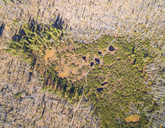 Germany, Bavaria, Lower Bavaria, Bavarian Forest National Park, Aerial view of Zwieselter Filz, raised bog, bog ponts - FOF09833