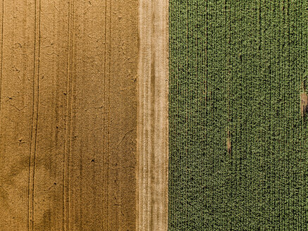 Serbia, Vojvodina, agricultural fields, aerial view at summer season - NOF00002
