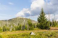 Germany, Bavaria, Lusen, Bavarian Forest National Park, Lusen, dead trees - FOF09882