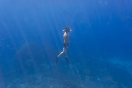 Man with fins and snorkel diving under water - KNTF01028