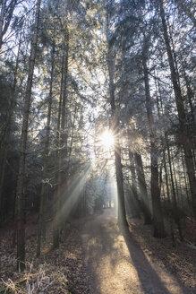 Germany, Bavaria, Upper Bavaria, Markt Schwaben, Schwabener Moos, hiking path in forest - FOF09930