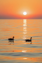 USA, Illinois, Chicago, Lake Michigan, canada geese at sunrise - FOF09950