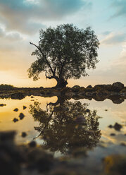 Thailand, Phi Phi Islands, Ko Phi Phi, lonely tree with reflection in the water at sunset - KKAF00903