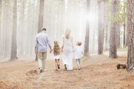 Family holding hands and walking in sunny woods - CAIF00039