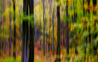 Blurred autumn forest - JTF00934