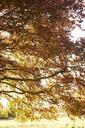 Autumn leaves on tree - CAIF00844
