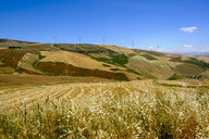 Italy, Sicily, near Corleone, Grain fields and wind wheels - LBF01813