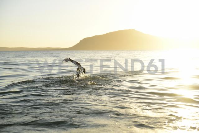 Man swimming in the sea in backlight - ECPF00204