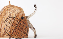 Cat climbing into wicker basket - CAIF01695