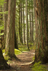 Dirt path in forest - CAIF02143