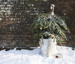 Christmas tree in trash can outdoors - CAIF02437