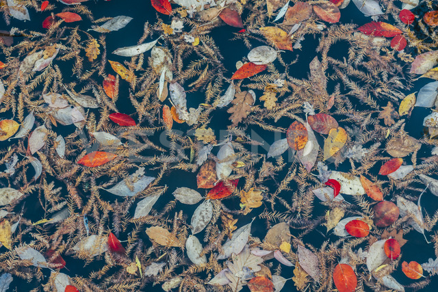 Full frame pattern of autumn leaves - CAIF04148 - Anna Wiewiora/Westend61