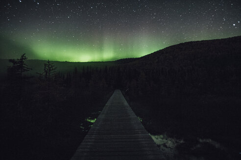Canada, British Columbia, Liard River Hot Springs Provincial Park, Northern Lights, starry sky at night - GUSF00364