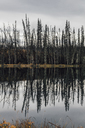 Canada, British Columbia, deadwood after forest fire - GUSF00370